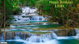 Lidd   Birthday   Nature