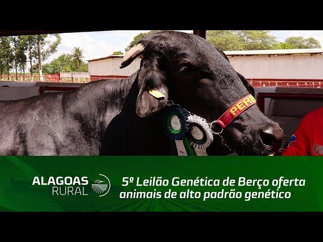 5º Leilão Genética de Berço oferta animais de alto padrão genético
