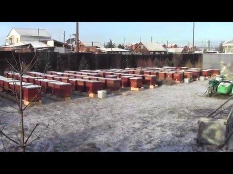 как построить омшаник для пчел видео