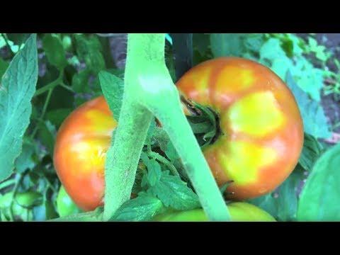 Organic Farming in NYC 1080p/60fps
