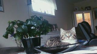 CUTEST KITTEN EVER - Lucas The Cat