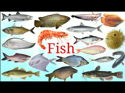 मछली का नाम English Mai || Fish Names And Picture || Fish || Easy English Learning Process