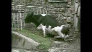 Азия реагирует на случай коровьего бешенства в США