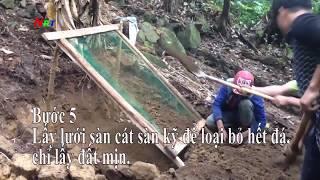 Kỹ thuật làm đất trồng sâm Ngọc Linh