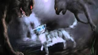 Коты Воители-- Коты и кошки в ночи