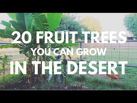 20 Fruit Trees you can grow in the DESERT!