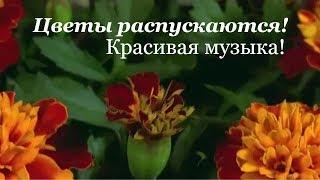 Живые цветы! Цветы распускаются! Красивая музыка!