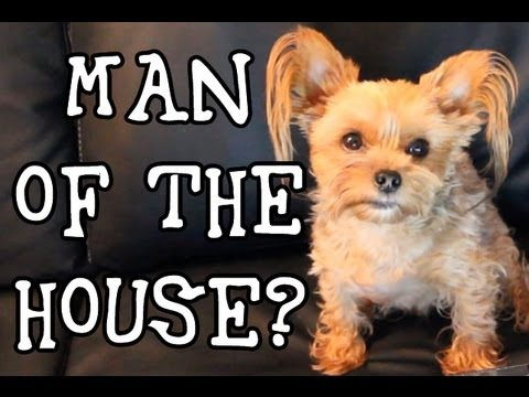 Man of the House: Funny Talking Dog Tease