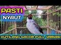 Suara Komplit Kutilang Gacor Pagi Hari Cocok Untuk Pancingan Pikat Masteran  Mp3 - Mp4 Download