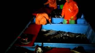 Pesca de jivia con el chaqueta de talcaguano