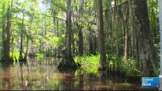 Louisiana Swamp Tour With Cajun Encounters - Episode 258