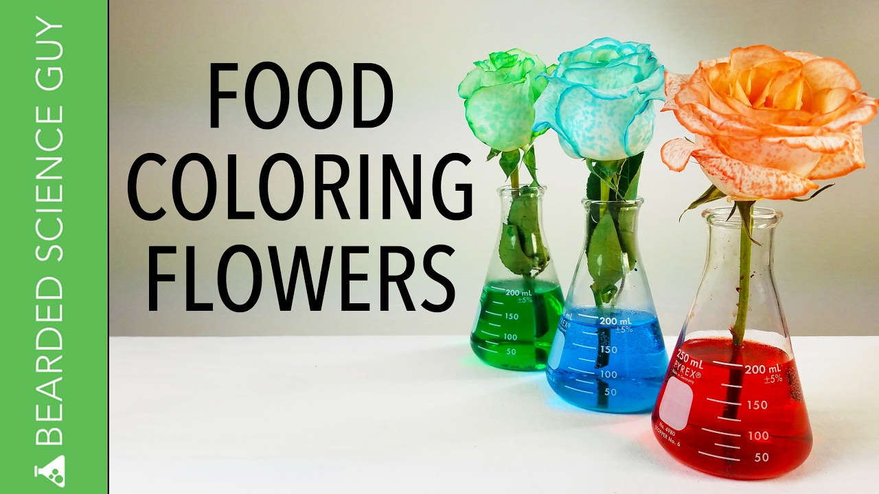 Food Coloring Flowers - YouTube