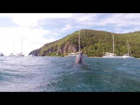 Delfin Guadeloupe
