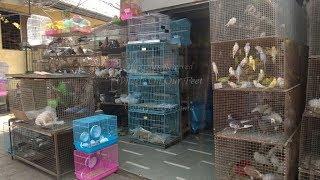 Скачать BEST PET SHOP IN DELHI NCR Priyanshu Sharma Geeta Colony