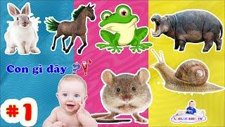 bé học nói các con vật, chuột,ếch,hà mã,ngựa,ốc sên,thỏ   teach children to identify animals part 1