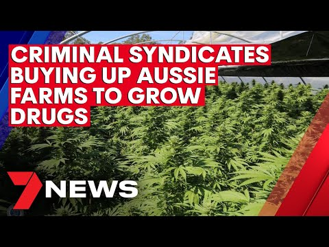 Criminal Syndicates Buying Up Aussie Farms To Grow Drugs | 7NEWS