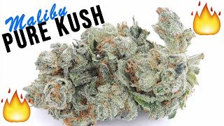 STRAIN REVIEW: