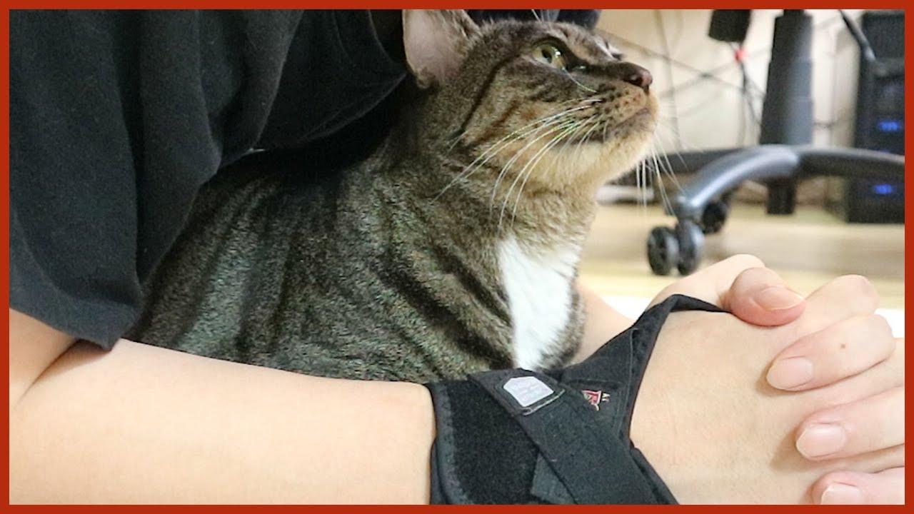 집에서 운동할 때 고양이를 활용하는 방법