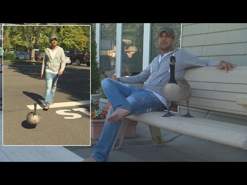 Man Adopts Abandoned Goose Who Now Acts Just Like a Dog