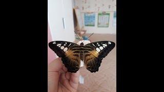 Домашняя мини-ферма бабочек