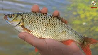 Рыбалка в Сентябре Кого на что ловить осенью Как ловить рыбу в Сентябре
