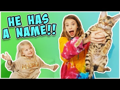 NEW KITTY NAME REVEAL!!