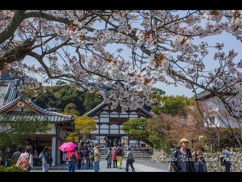 Tenryu-ji-Arashiyama-April 2011