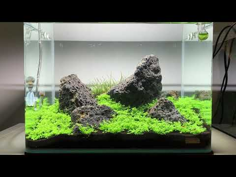 Nano Iwagumi with Hemianthus callitrichoides 'cuba' - 10 day update