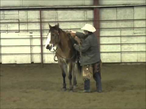 Rosie - Cute Large Pony Mare for Sale