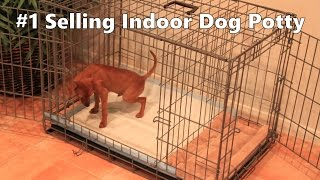 Indoor Dog Potty - #1 Selling Indoor Dog Potty - Indoor Dog House Training - Indoor Housebreaking