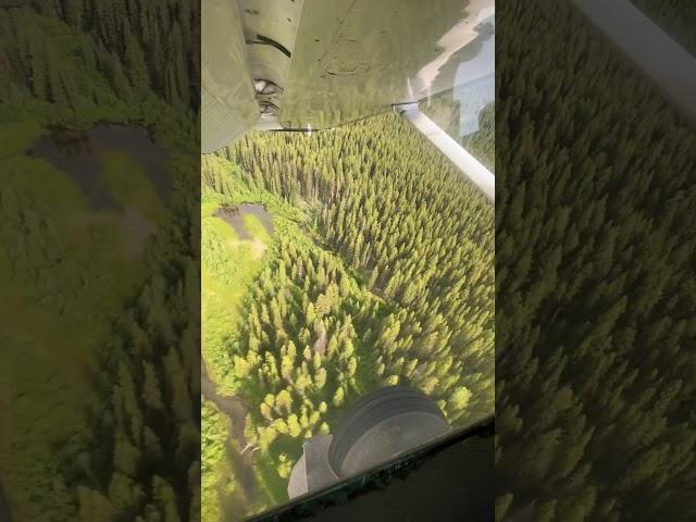 Flight into Schafer meadows USFS airstrip