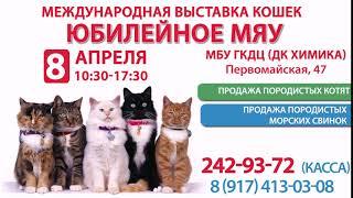 выставка кошек в Уфе 8 апреля