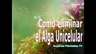 Como eliminar el Alga Unicelular