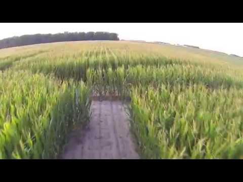 Steele Farms - 2013 Corn Maze