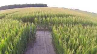 Steele Farms - 2013 Corn Maze