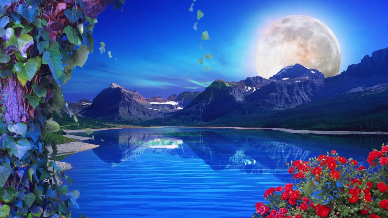 Nature Background Loop  Free Background  HD  60 fps - YouTube