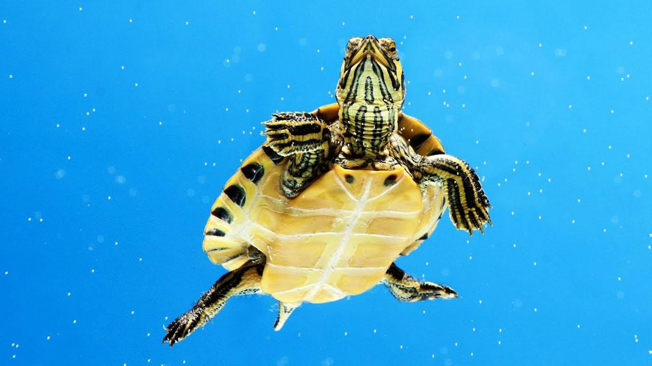 What's an Aquatic Turt...