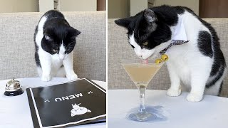 How To Order and Drink Martini