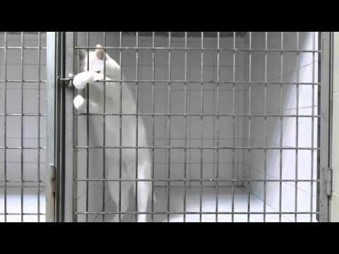 A cat Unlock His cage to escape !!