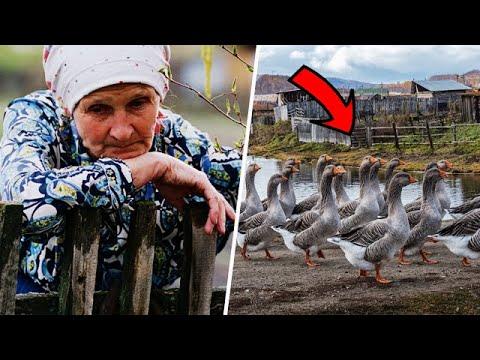 Бабушка думала, что приютила дикую птицу, которая не причинит ей вреда, но случилось немыслимое!