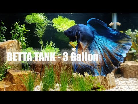 Betta Tank 3 Gallon  Setting up