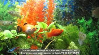 Аквариум с натуральными и искусственными растениями
