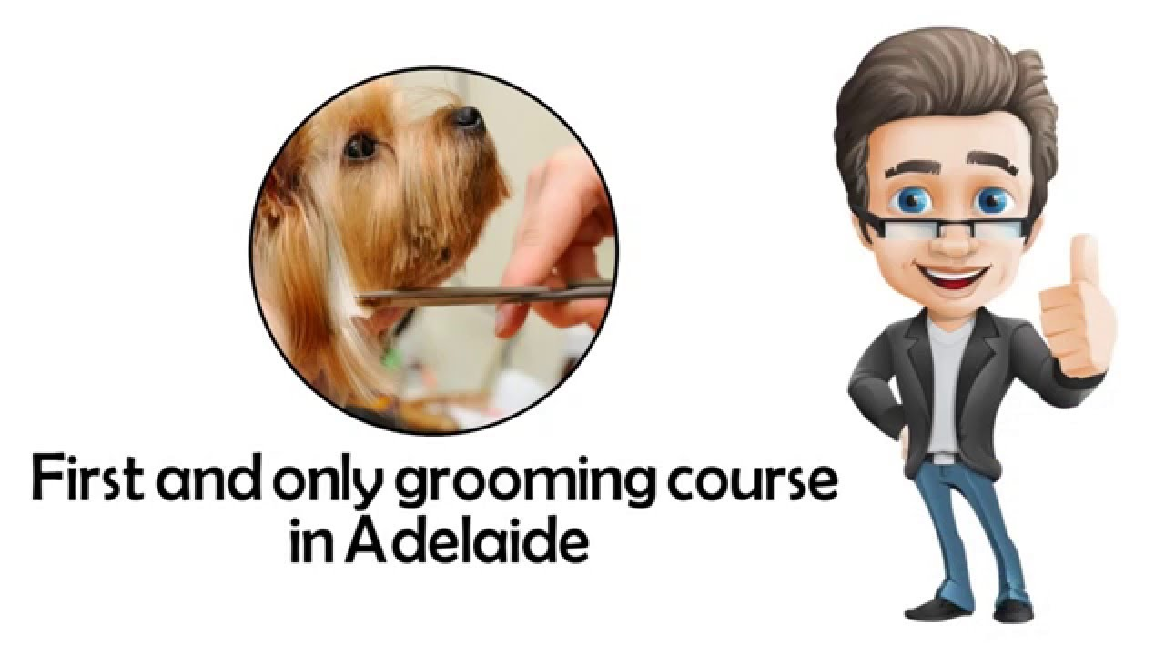 Download Best Dog Grooming Course Adelaide, 5000
