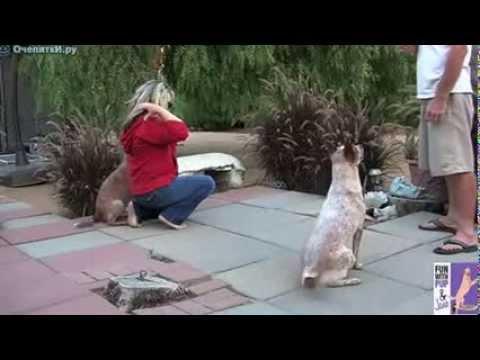 Смешное и познавательное видео про собак