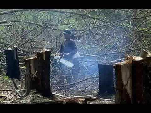 essay deforestation malayalam