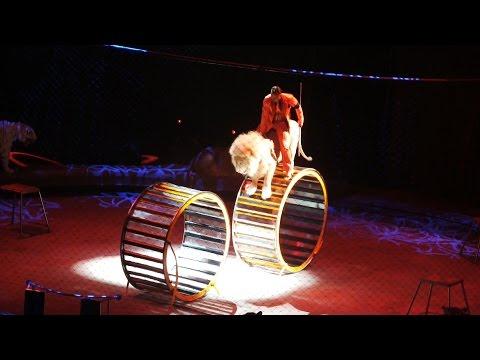 Видео, Brothers Zapashny Circus 17 05 2015 - Цирк братьев Запашных - 17 мая 2015 г
