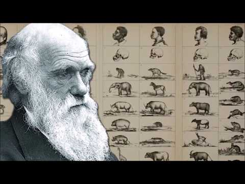 Charles Darwin Was Wrong ~ Mike Church & Chris Ferrara