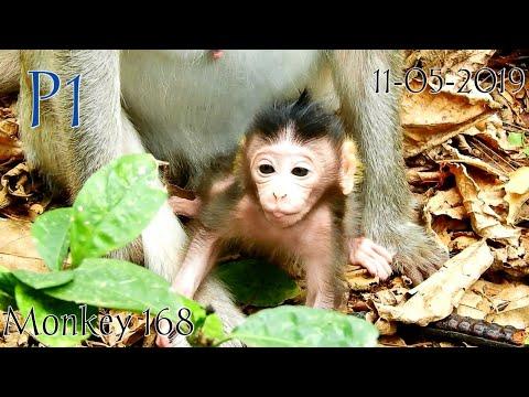 Timber Parody (Pitbull Ke$ha) by Brian O'Sullivan from YouTube · Duration:  3 minutes 29 seconds
