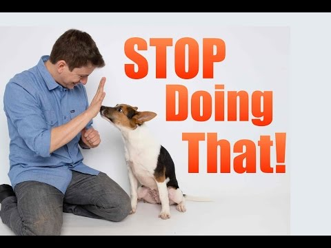 how-to-correct-your-dog's-bad-behavior!