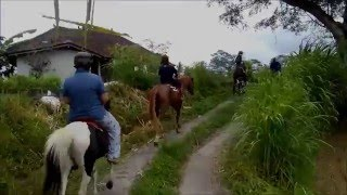 Ubud - Horse Riding